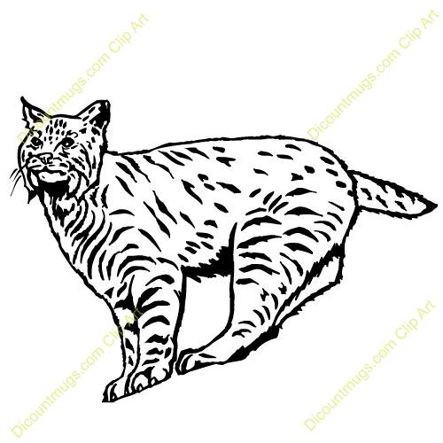 Clip art look at. Bobcat clipart bob cat