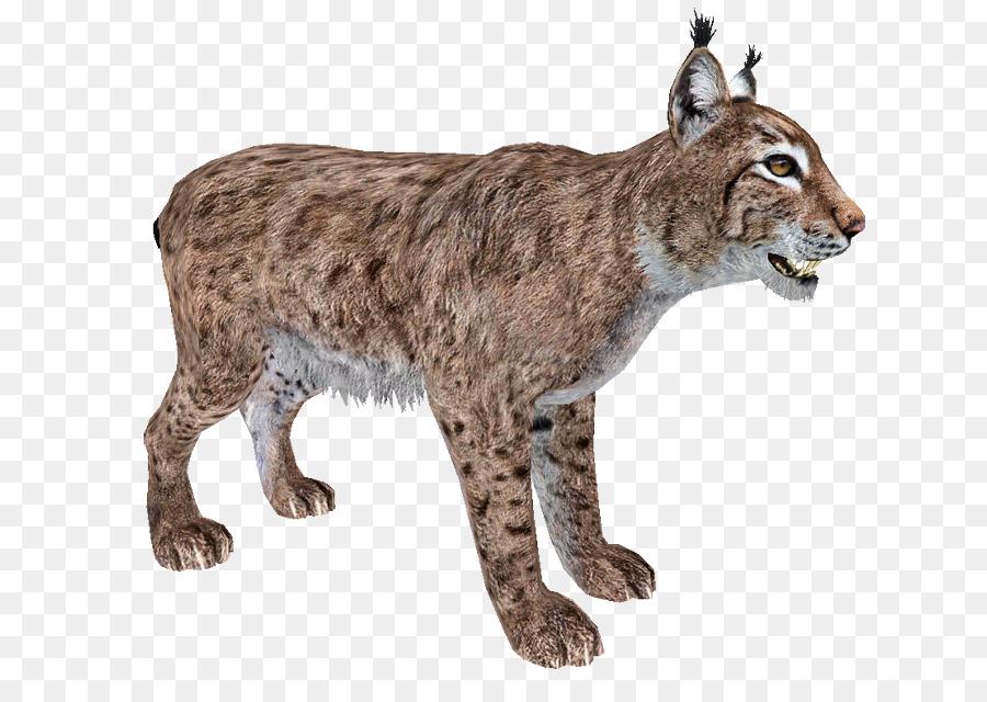Zoo tycoon eurasian felidae. Bobcat clipart canada lynx