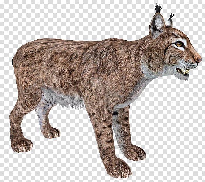 Bobcat clipart canada lynx. Transparent background png cliparts