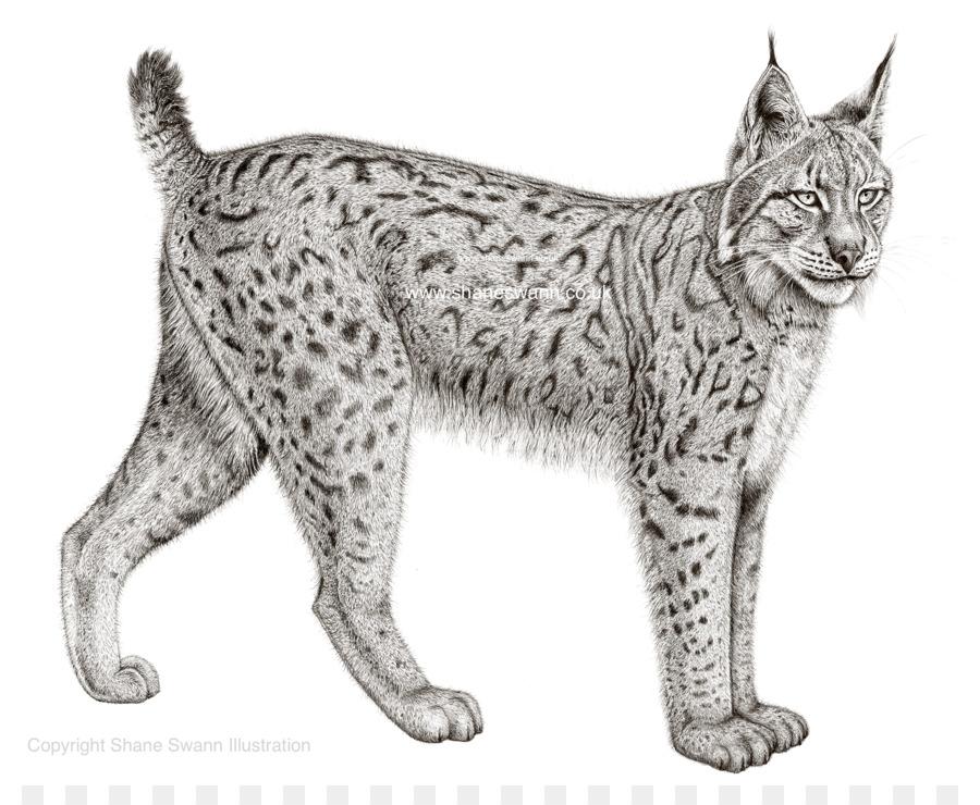 Eurasian felidae iberian png. Bobcat clipart canada lynx