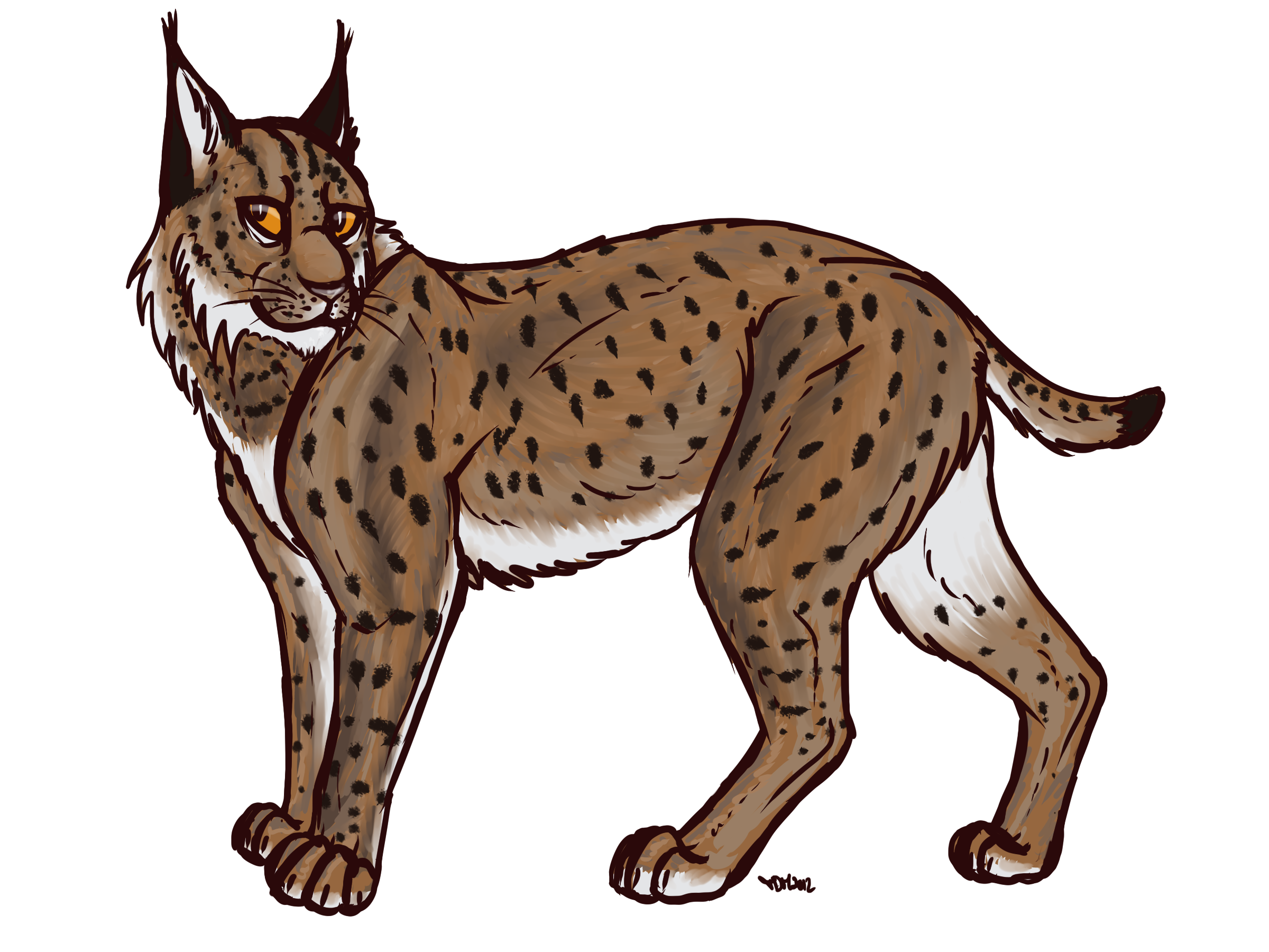 Eurasian drawing clip art. Bobcat clipart canada lynx