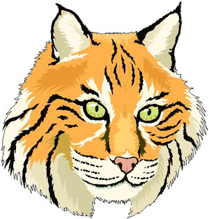 . Bobcat clipart cartoon