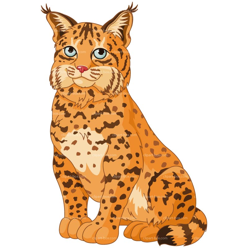Free cliparts download clip. Bobcat clipart cartoon