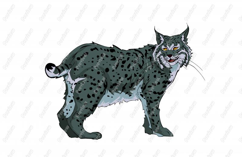 Realisitic clip art royalty. Bobcat clipart character
