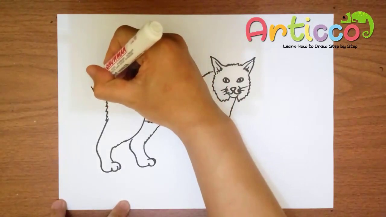 Bobcat clipart draw. How to a step