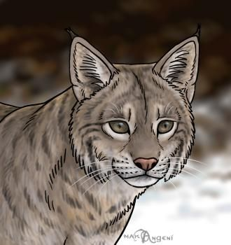 Bobcat clipart draw.  best drawing images