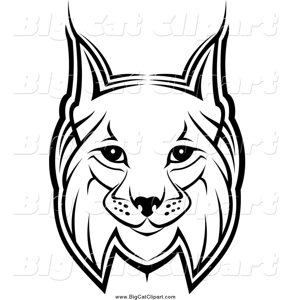 Cool drawing google search. Bobcat clipart draw