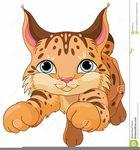 Bobcat clipart face. Of free images at