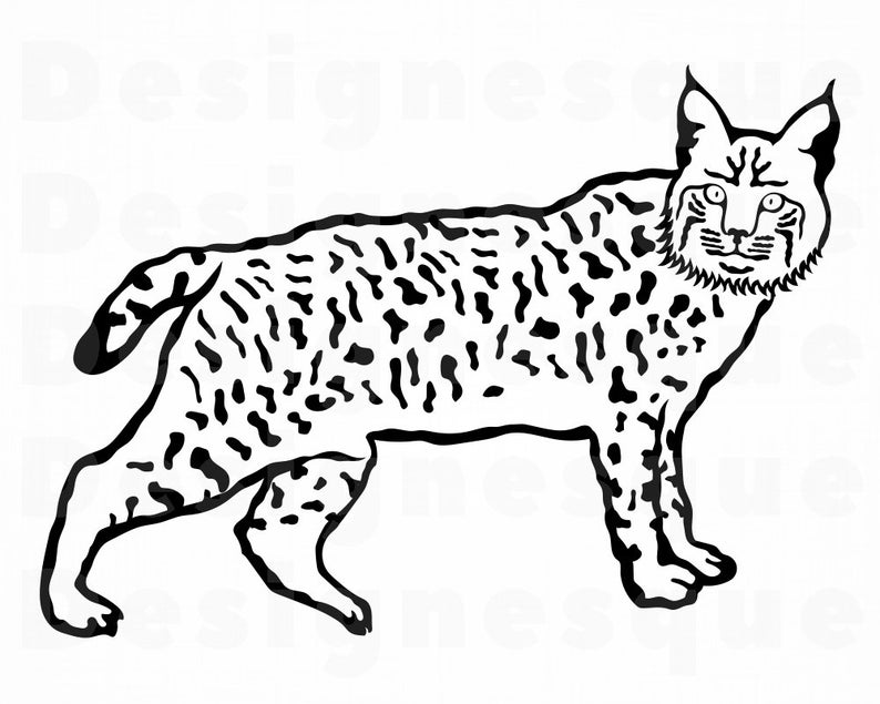Svg wild cat files. Bobcat clipart file
