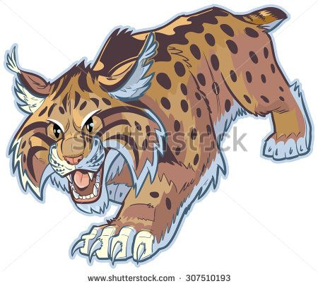 Wildcat clipart bobcat. Vector cartoon stockillustration of