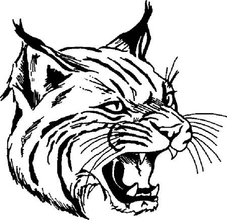 Mascot download. Bobcat clipart illustration