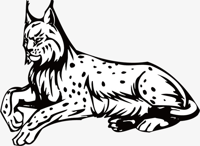 Bobcats drawing black and. Bobcat clipart line