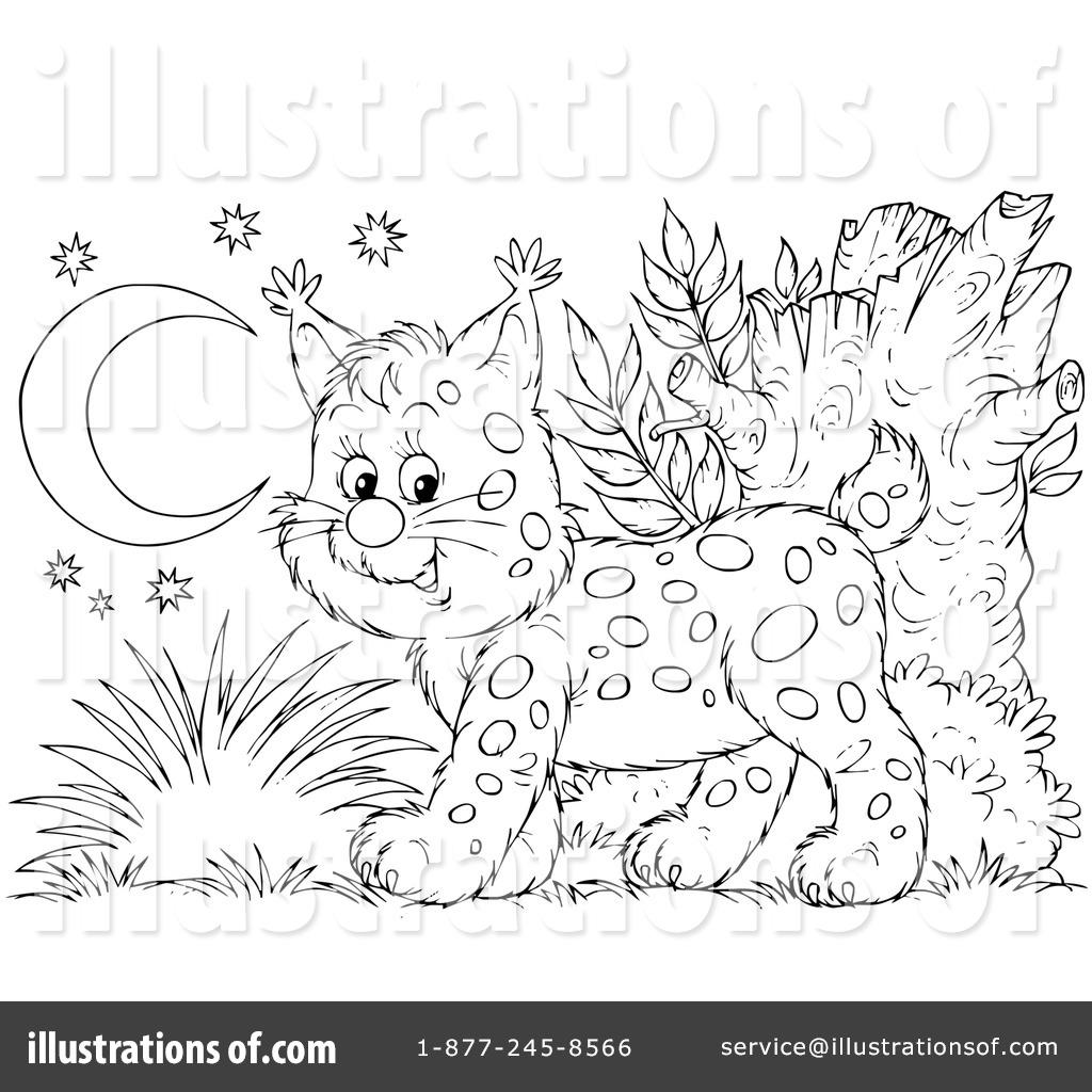 Illustration by alex bannykh. Bobcat clipart lineart