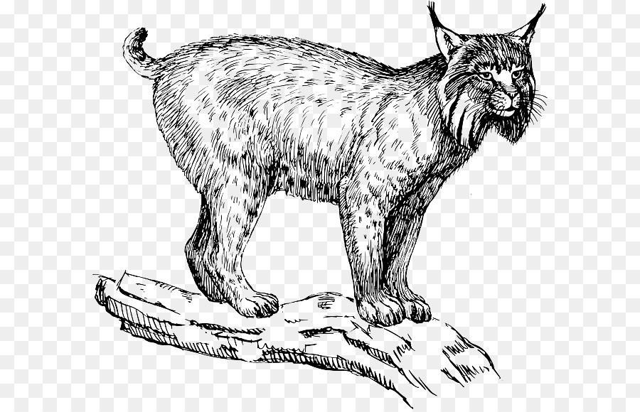 Bobcat clipart lion. Eurasian lynx felidae wildcat