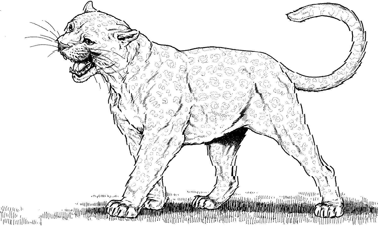 Mountain coloring sheets gulfmik. Bobcat clipart lion
