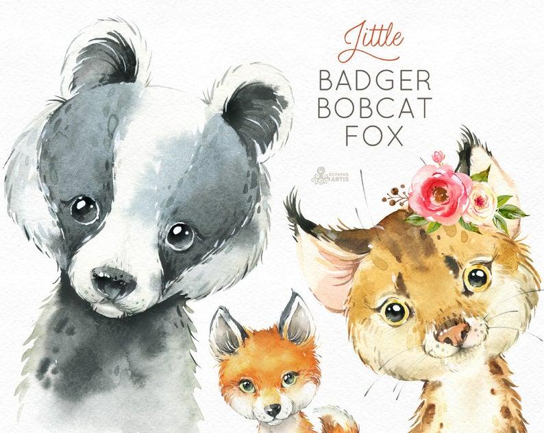 Bobcat clipart lynx. Little badger fox watercolor