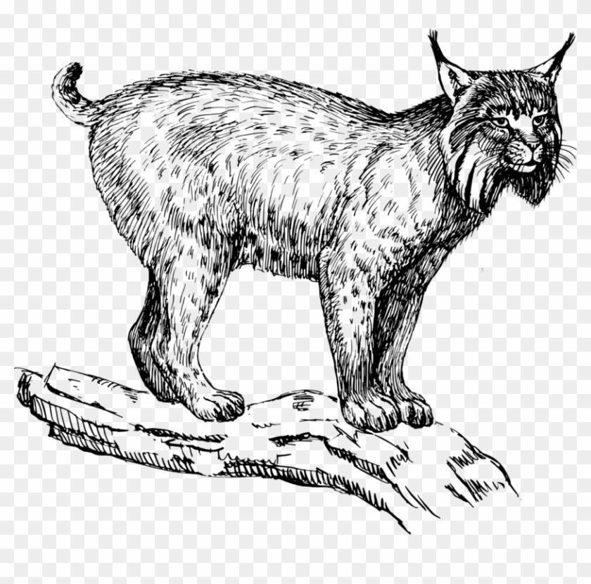 Bobcat clipart lynx. Eurasian wildcat felidae drawing