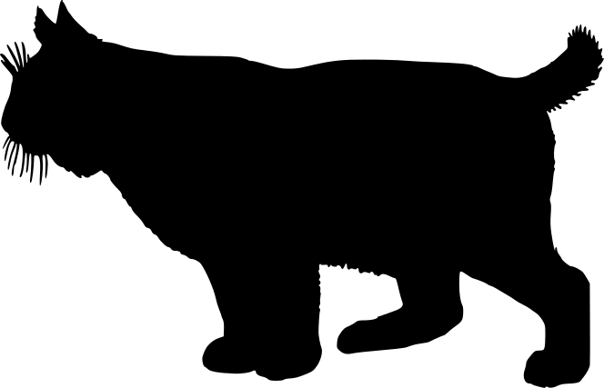 Pencil and in color. Bobcat clipart silhouette