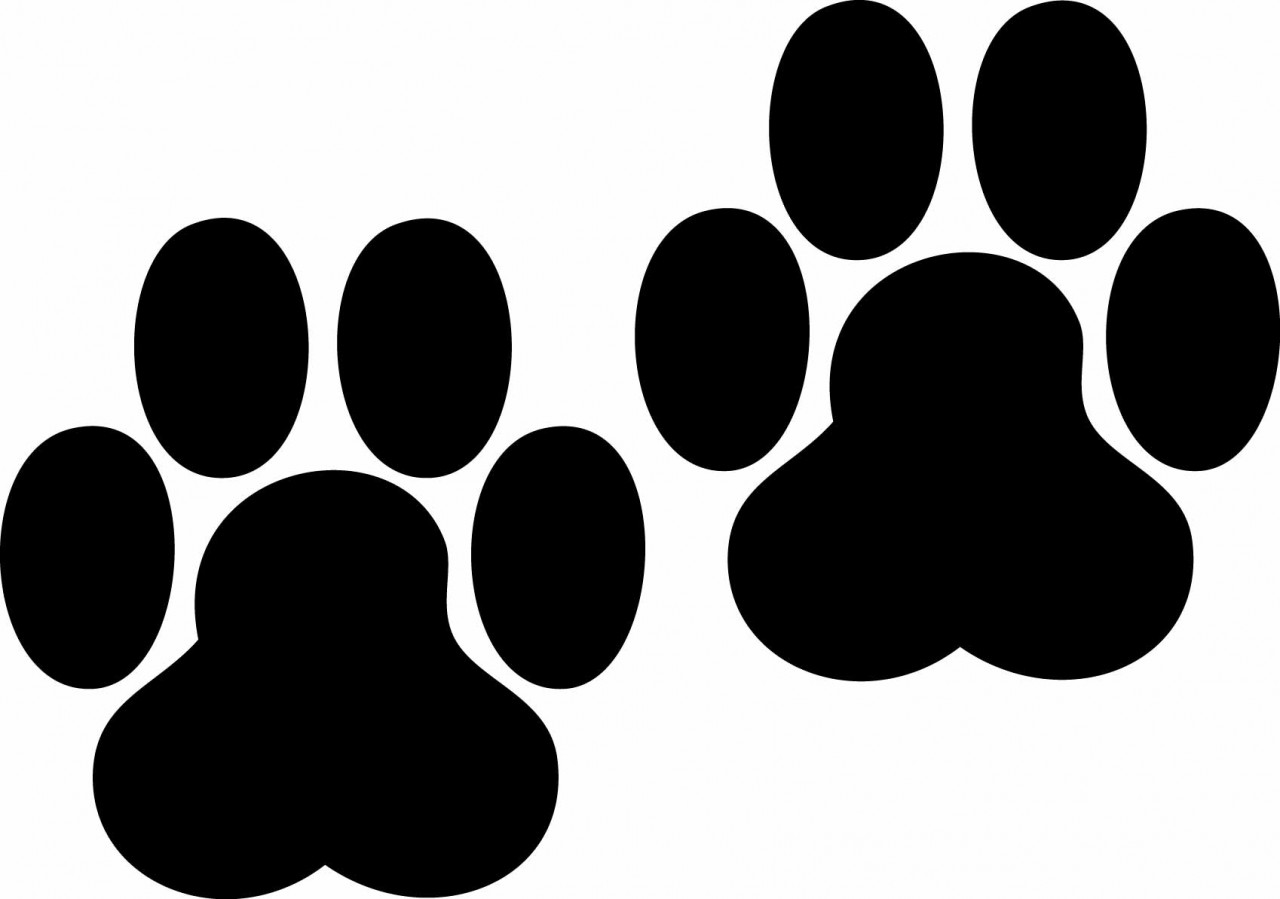 Dog paw print at. Bobcat clipart silhouette