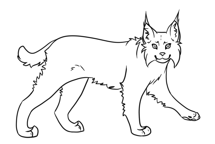 bobcat clipart simple