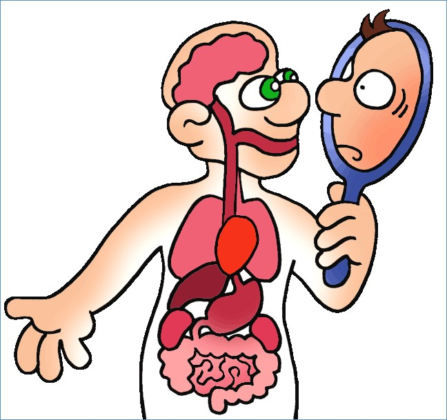 Body clipart anatomy. Human ammoparadise com the