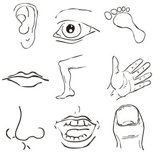 Free cliparts download clip. Body clipart animated