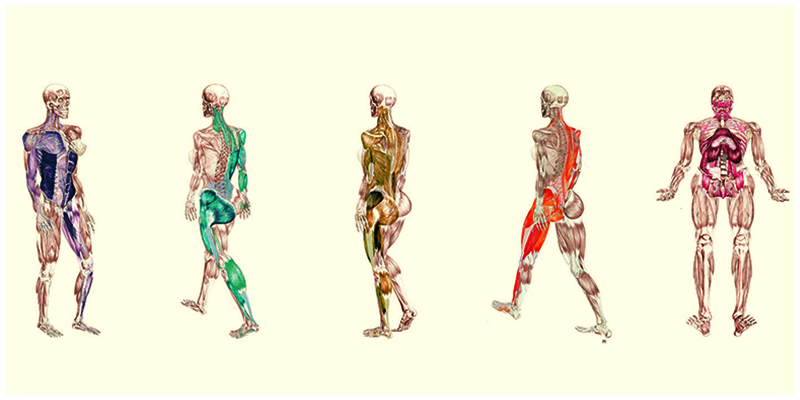 Locomotion in human beings. Body clipart body movement
