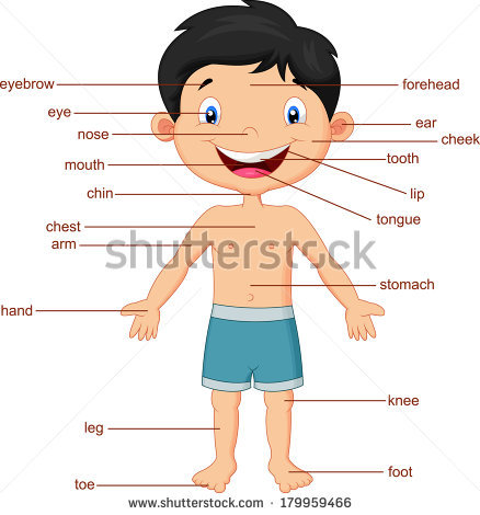 Face parts for doctors. Body clipart body part