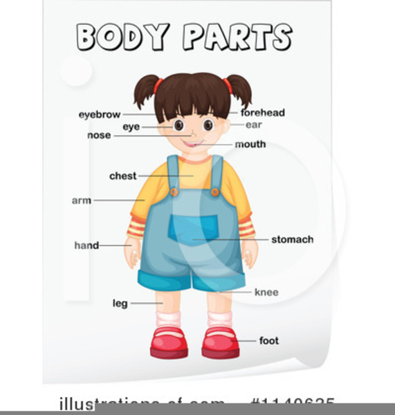 Free parts images at. Body clipart body part
