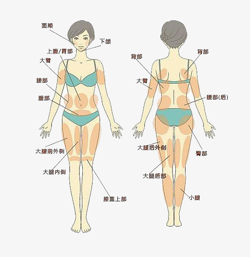 Body clipart body structure. Medical human tissue chart