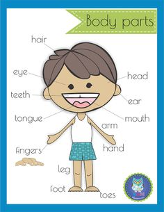 Body clipart body structure. Parts picture word cards