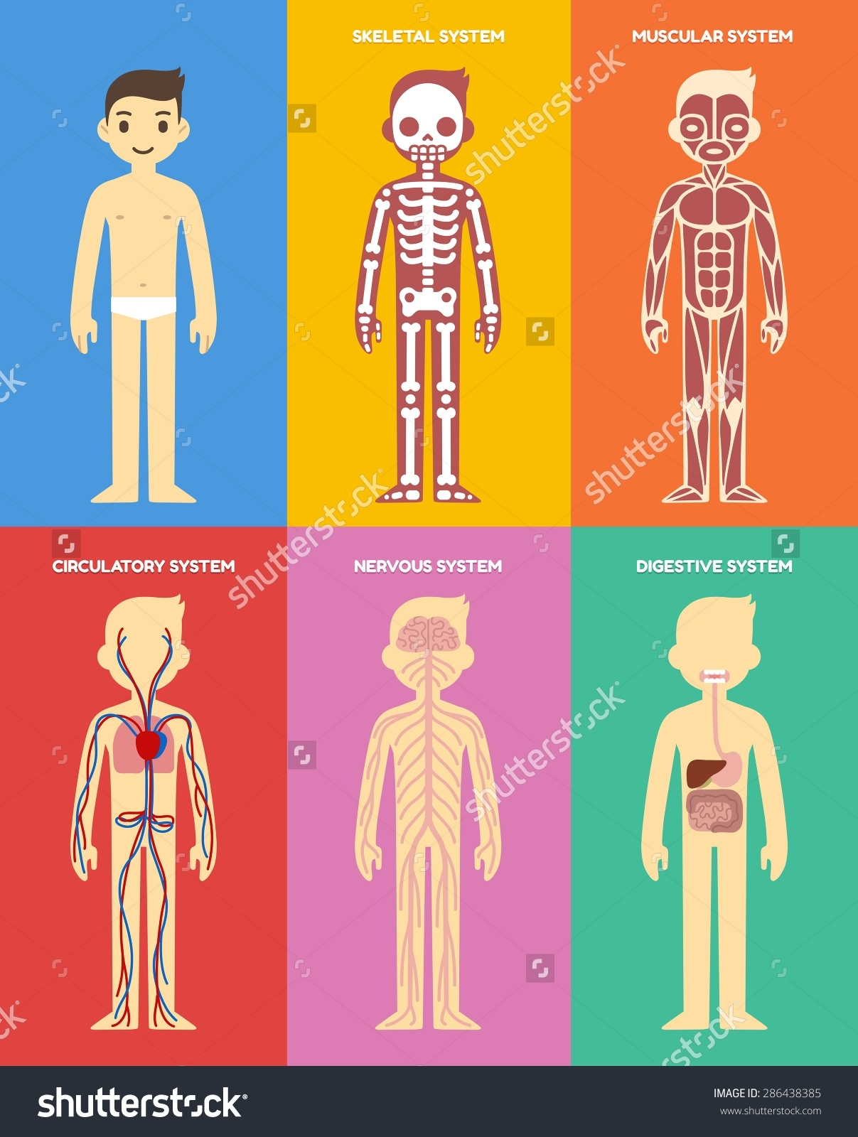 In human cartoons clipartfest. Body clipart body system