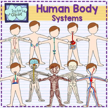Human systems science clip. Body clipart body system