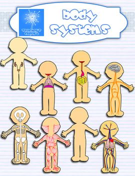 Human systems bundle science. Body clipart body system