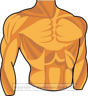 . Body clipart chest