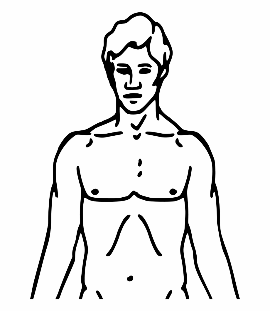Outline image diagram human. Body clipart chest