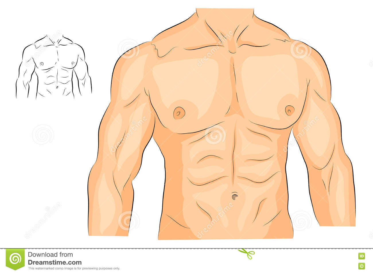 Body clipart chest. Station