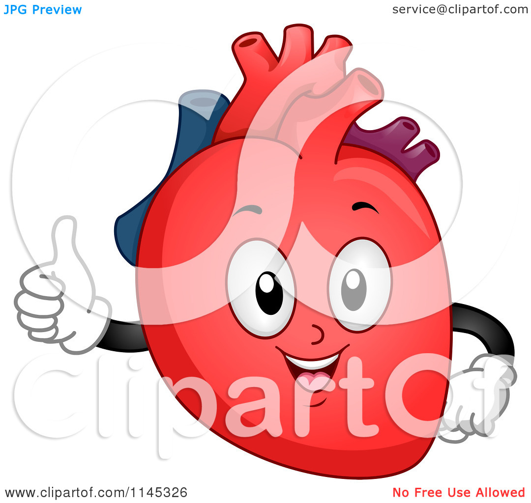 Anatomical heart images human. Body clipart cute