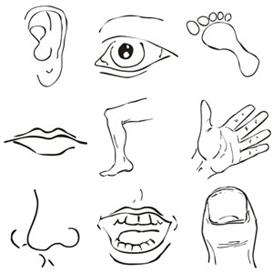Images clip art parts. Body clipart face