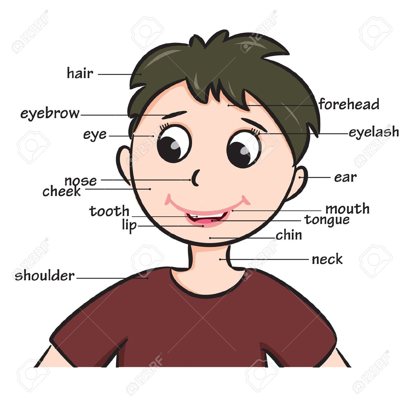 Parts of the human. Body clipart face