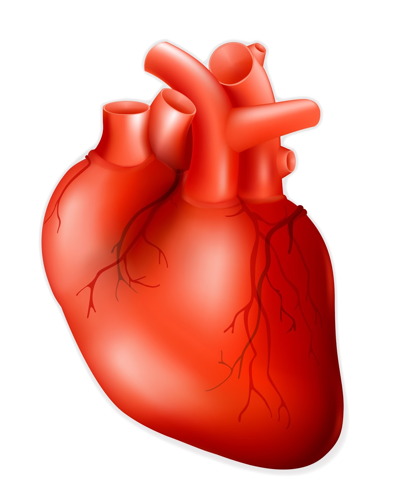 Body clipart heart. Human for kids clipartxtras
