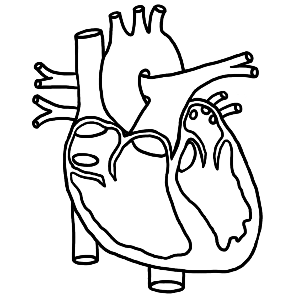 Diagram black and white. Body clipart heart