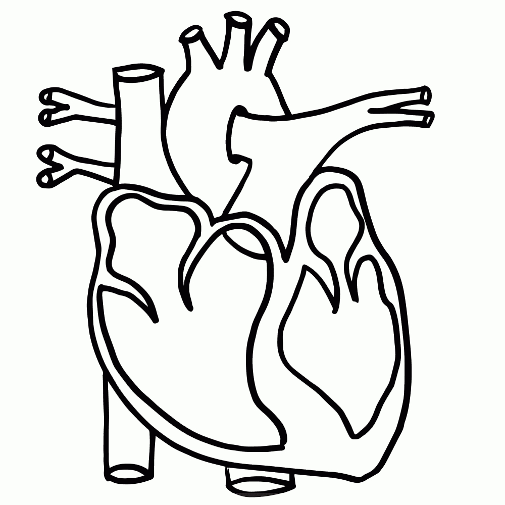 Human images with parts. Body clipart heart