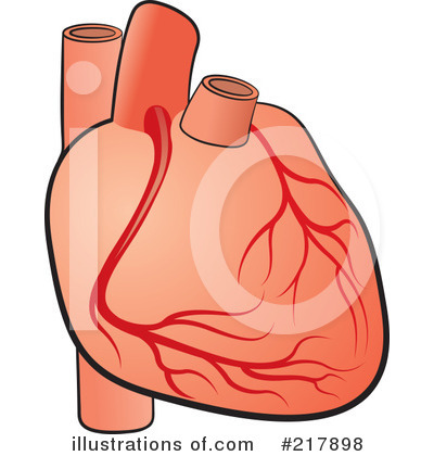 Body clipart heart.  collection of human