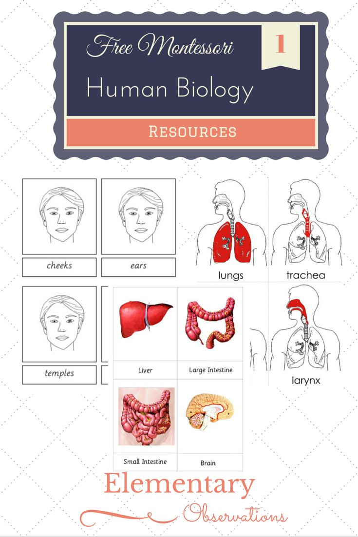 best basic anatomy. Body clipart human biology