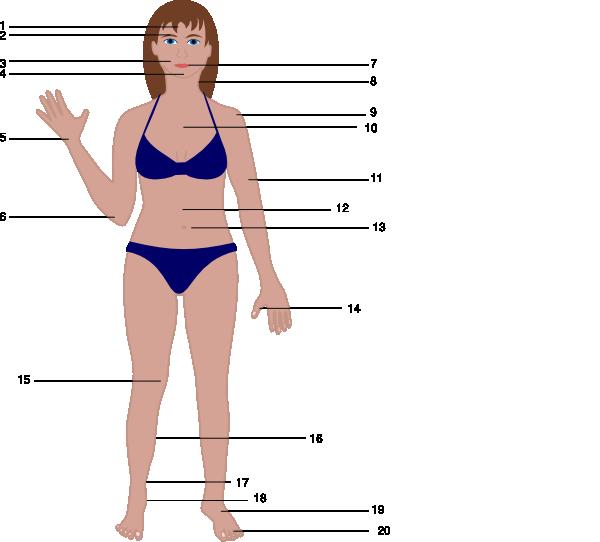 Clip art at clker. Body clipart human body