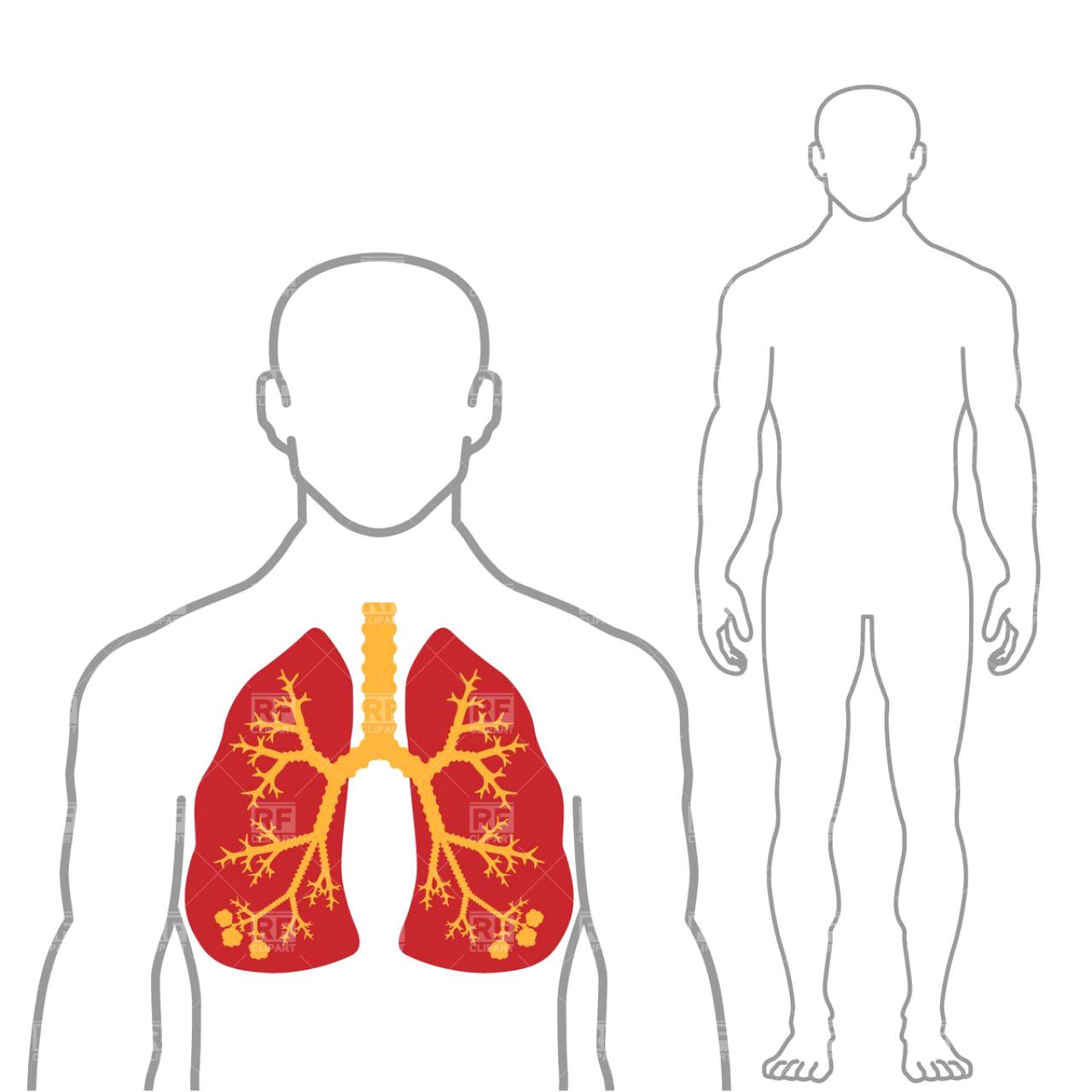 Spleen outline clip art. Body clipart human body