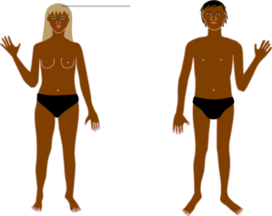 body clipart human body
