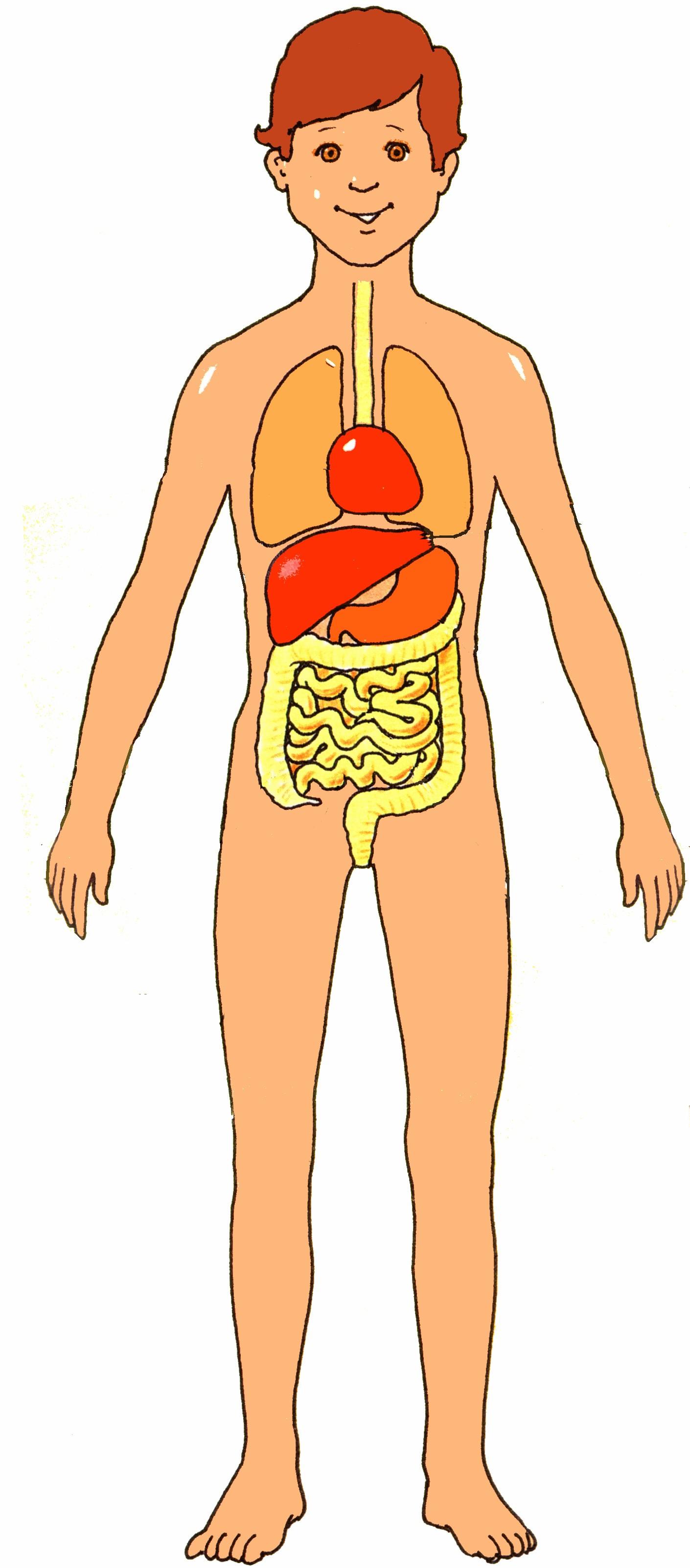 Body clipart human body. Free download clip art