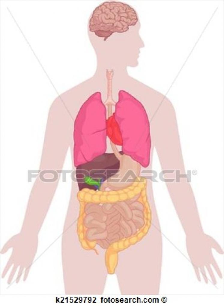Body clipart illustration. Anatomy human of brain